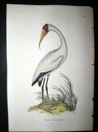 Shaw C1800's Antique Hand Col Bird Print. Wood Tantalus